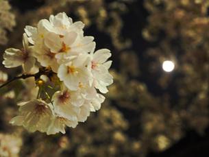 東京 神楽坂 春の夜景 FYI01176253