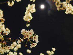 東京 神楽坂 春の夜景 FYI01176254