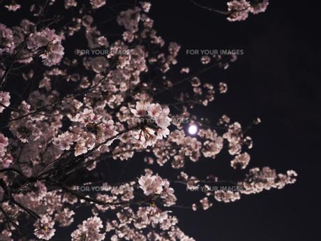 東京 神楽坂 春の夜景 FYI01176255