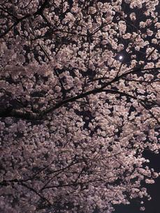 東京 神楽坂 春の夜景 FYI01176256
