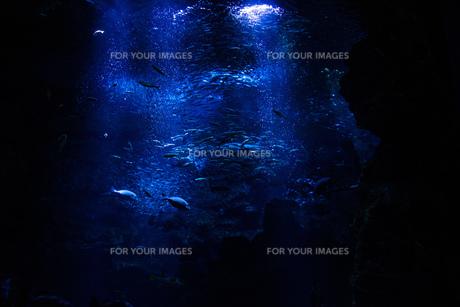 水族館の写真素材 [FYI01193074]