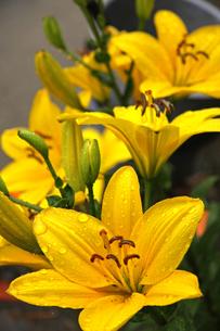 雨の日の花 FYI01200744