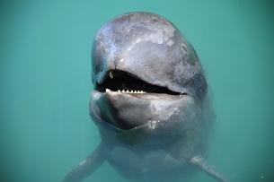 鯨笑みの写真素材 [FYI01211703]