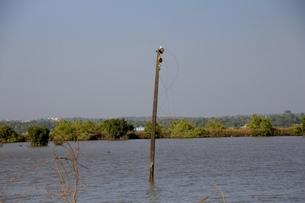 崩壊した文明。インド、ゴアの湖。沈没。電柱。の写真素材 [FYI01225598]